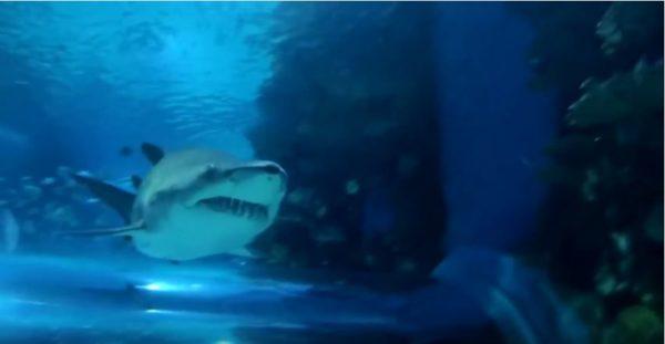 """Tropicarium – a """"cápás állatkert"""""""