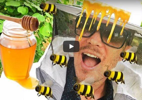 Hogyan készül a méz?
