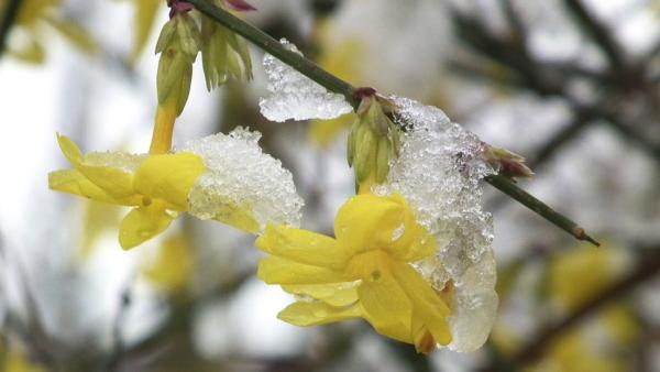 Tavaszi fáradtság: miért van és mit tehetünk ellene?